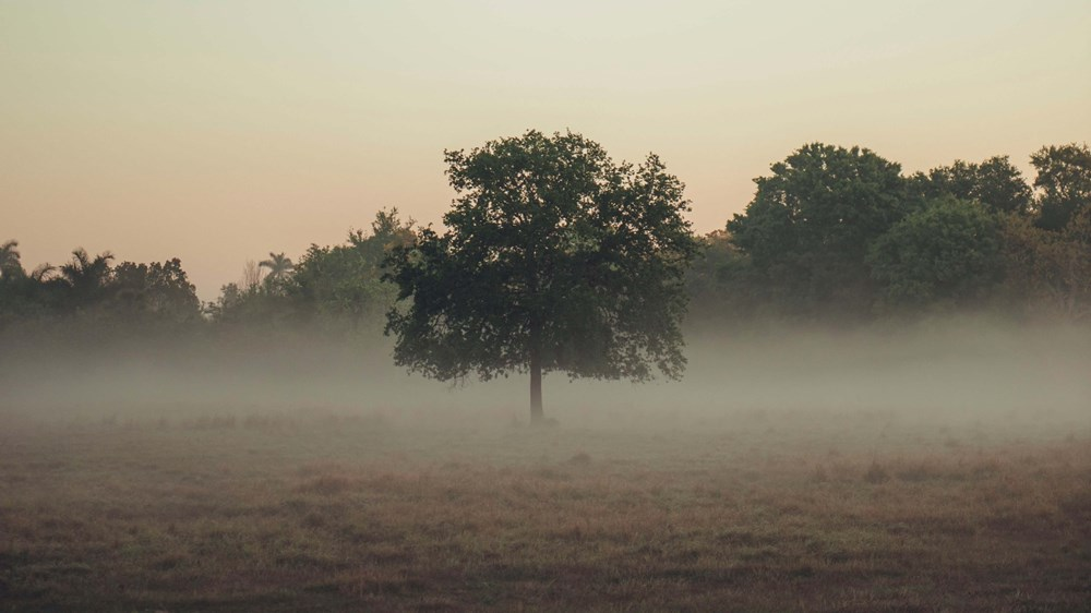 lonely tree in a field with fog