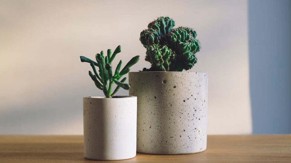 Plants in the light | Wealthify